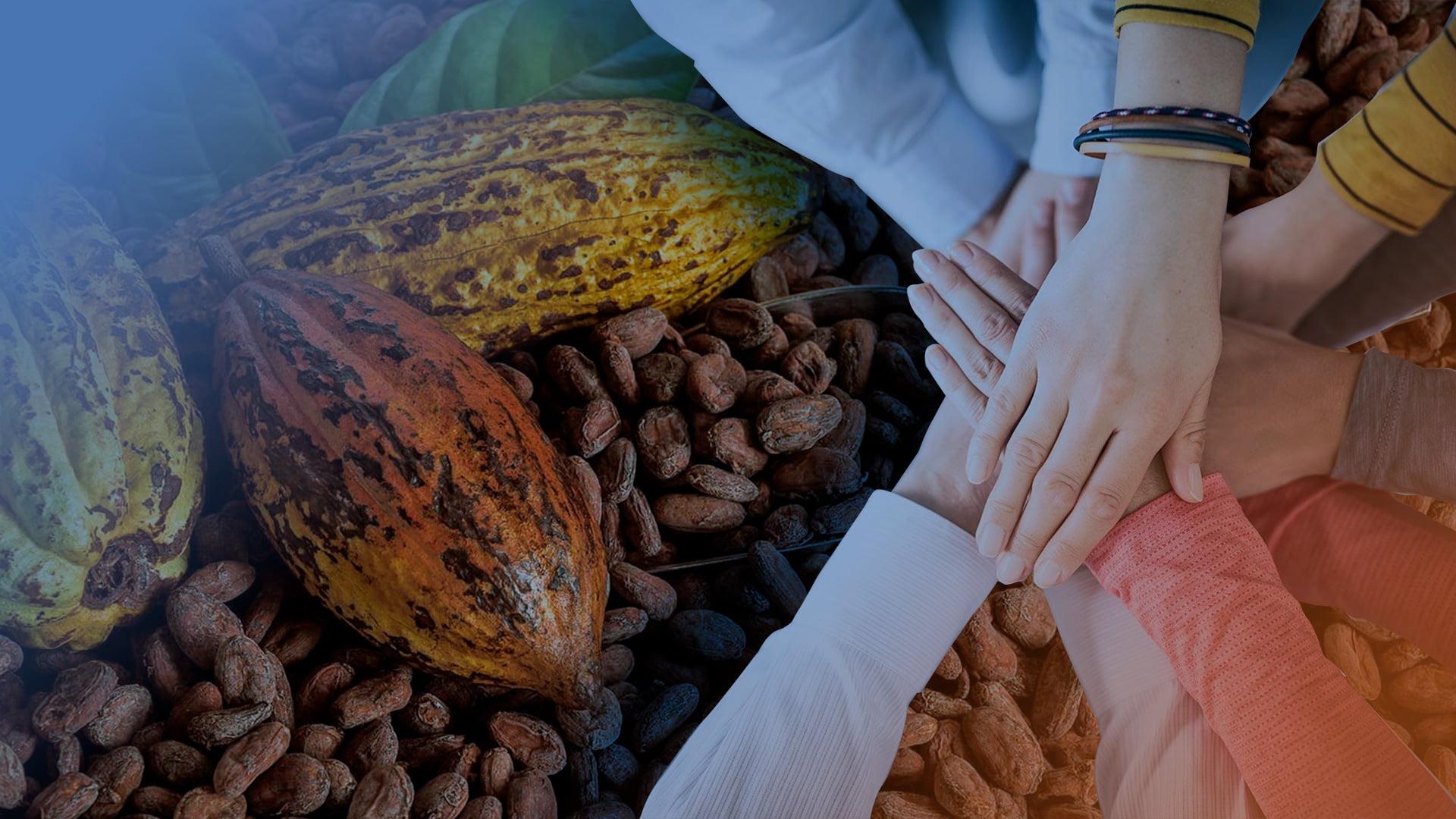 Innova Funding y Alianza Cacao Perú se unen para llevar financiamiento a sector cacaotero
